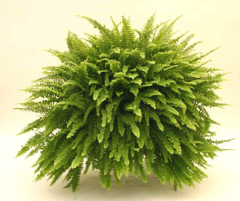 Viveros eden agua mineral eden 1982 2016 plantas de for Viveros plantas de interior