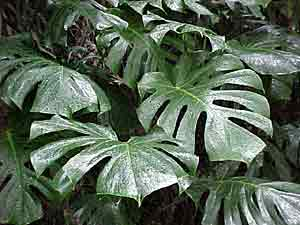 Viveros eden agua mineral eden 1982 2016 plantas de - Plantas venenosas de interior ...